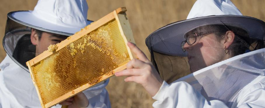 Ripon College beekeeping