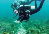 WLC scuba divers